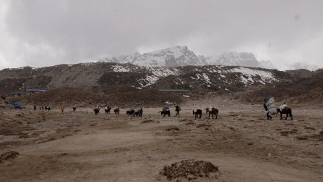 エベレストBCから登山隊の荷物を下ろすヤクと馬。撮影はゴラクシップにて