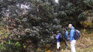 植林地域の視察