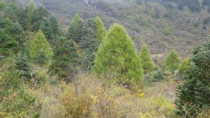 サマガオンの自然林の種と景色
